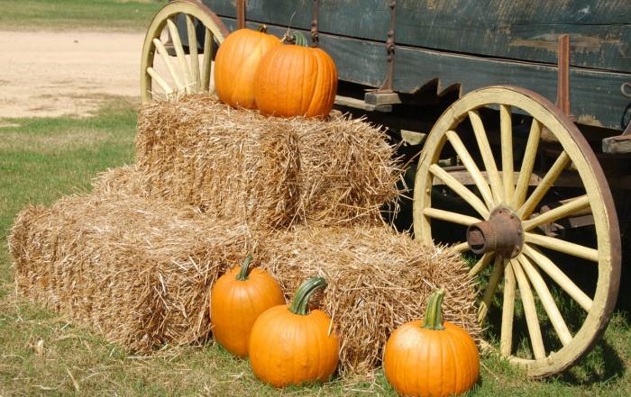 fall activities lexington ky